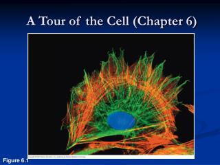 A Tour of the Cell (Chapter 6)