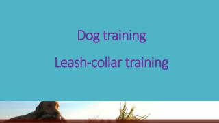 Dog training  - Leash-collar training