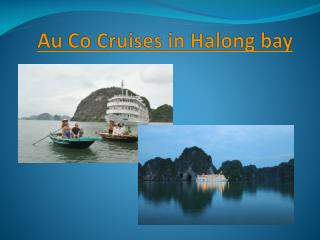 Au Co Cruises in Halong bay