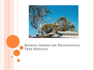 Banksia Arborcare Professional Tree Services