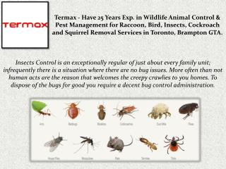 Insects Removal Services