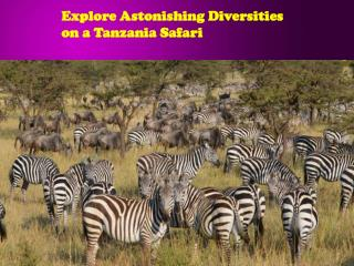 Explore Astonishing Diversities on a Tanzania Safari