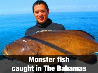 Monster fish caught in The Bahamas