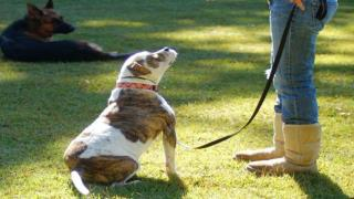 Know All About Good Dog Training Collars