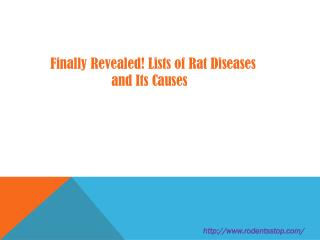 Finally Revealed! Lists of Rat Diseases and Its Causes