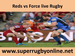 Reds vs Force live Rugby
