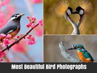 Most Beautiful Bird Photographs