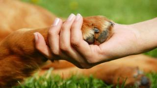 Training Your Dog At Home