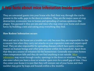 A few facts about mice infestation inside your house