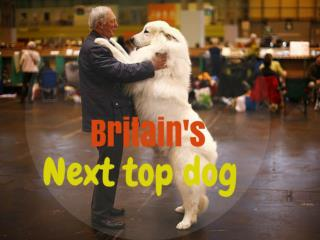 Britain's next top dog