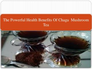 The Powerful Health Benefits Of Chaga  Mushroom Tea