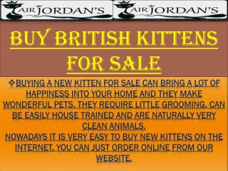 Buy British Kittens For Sale