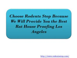 Choose Rodents Stop Because We Will Provide You the Best Rat