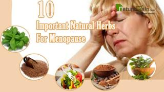 Top 10 Important Natural Herbs For Menopause To Provide Imme