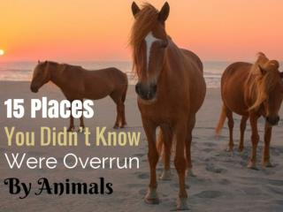 15 Places You Didn't Know Were Overrun By Animals