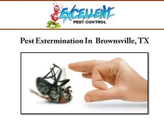 Pest Extermination Services In Brownsville, TX