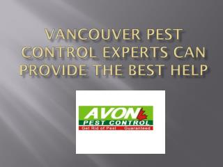 Vancouver Pest Control Experts Can Provide The Best Help
