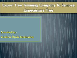 Expert Tree Trimming Company To Remove Unnecessary Tree