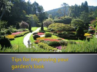 Tips for Improving your garden's look