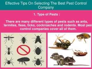 Effective Tips On Selecting The Best Pest Control Company