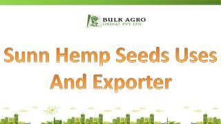 Sunn Hemp Seeds Uses And Exporter