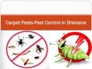 Carpet Pests-Pest Control in Brisbane