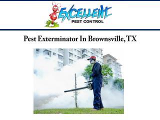 Pest Exterminator In Brownsville, TX