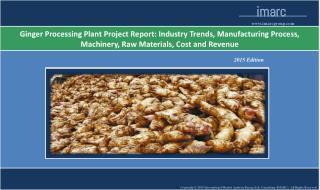 Ginger Processing Plant | Market Trends, Cost