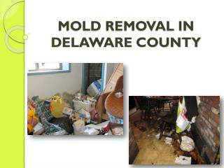 MOLD REMOVAL IN DELAWARE COUNTY