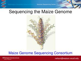 Sequencing the Maize Genome