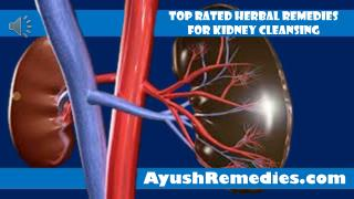 Top Rated Herbal Remedies For Kidney Cleansing