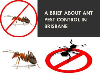 A brief about Ant Pest Control in Brisbane