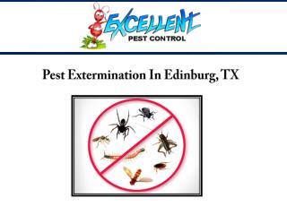 Pest Extermination In Edinburg, TX