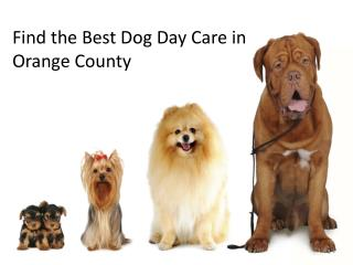 Find the Best Dog Day Care in Orange County