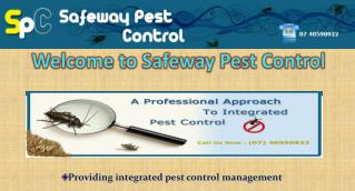 Pest Control for Termite by Professional Inspector in Cairns