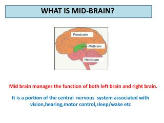 Mid Brain Activation for children