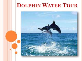 Dolphin Water Tours – The Best Water Tour in Augustine