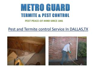 Pest and Termite control Service In DALLAS,TX