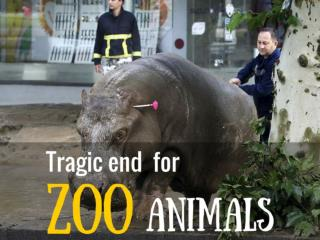 Tragic end for Zoo Animals