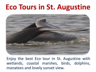 Eco Tours in St. Augustine