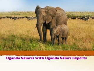 Uganda Safaris with Uganda Safari Experts