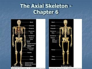 The Axial Skeleton - Chapter 6