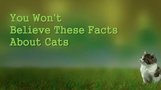 You Wont Believe These Facts About Cats