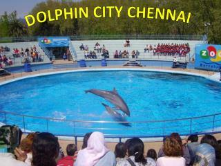 Dolphin City Chennai – Find Address, Fees