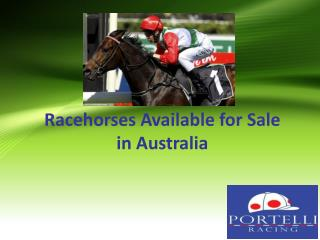 Racehorses Available for Sale in Australia