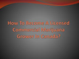 How To Become A Licensed Commercial Marijuana Grower In Canada?