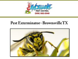 Pest Exterminator - Brownsville TX