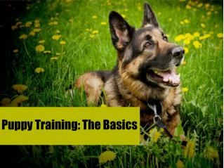 Puppy Training: The Basics