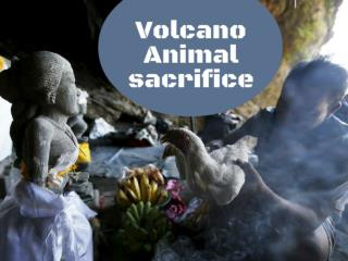 Volcano animal sacrifice