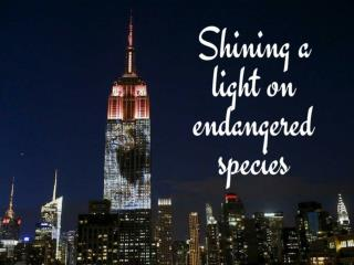 Shining a light on endangered species